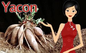 yacon-syrup-plant